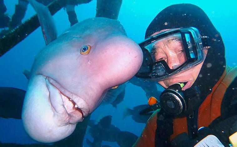 For More Than 25 Years This Japanese Diver Has Been Visiting His Best Friend A Fish