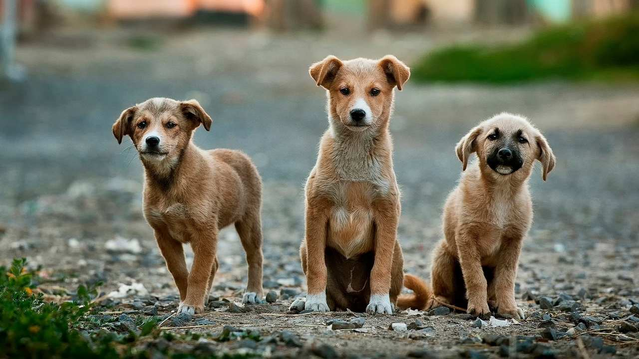 ANCIENT CANCER HAS BEEN SPREADING AMONG DOMESTICATED DOGS FOR THE PAST 6,000 YEARS