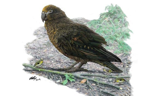 """Sqawkzilla"": 3-Foot Prehistoric Parrot Is The Biggest Ever Found"