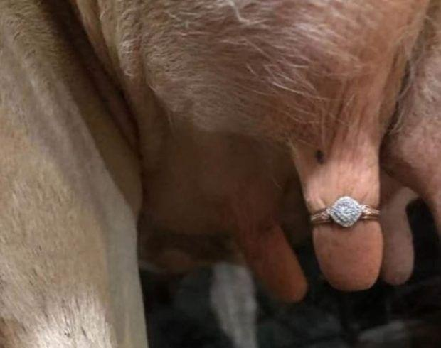 Farmer Proposes To Girlfriend By Putting A Ring On Cow