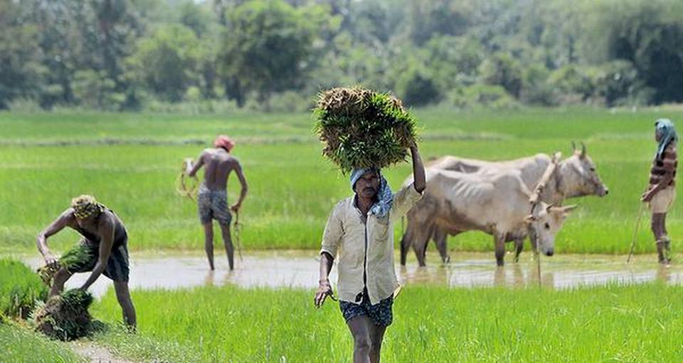 PMKMY: Govt aims to enroll 2-cr farmers for pension scheme by Aug 15