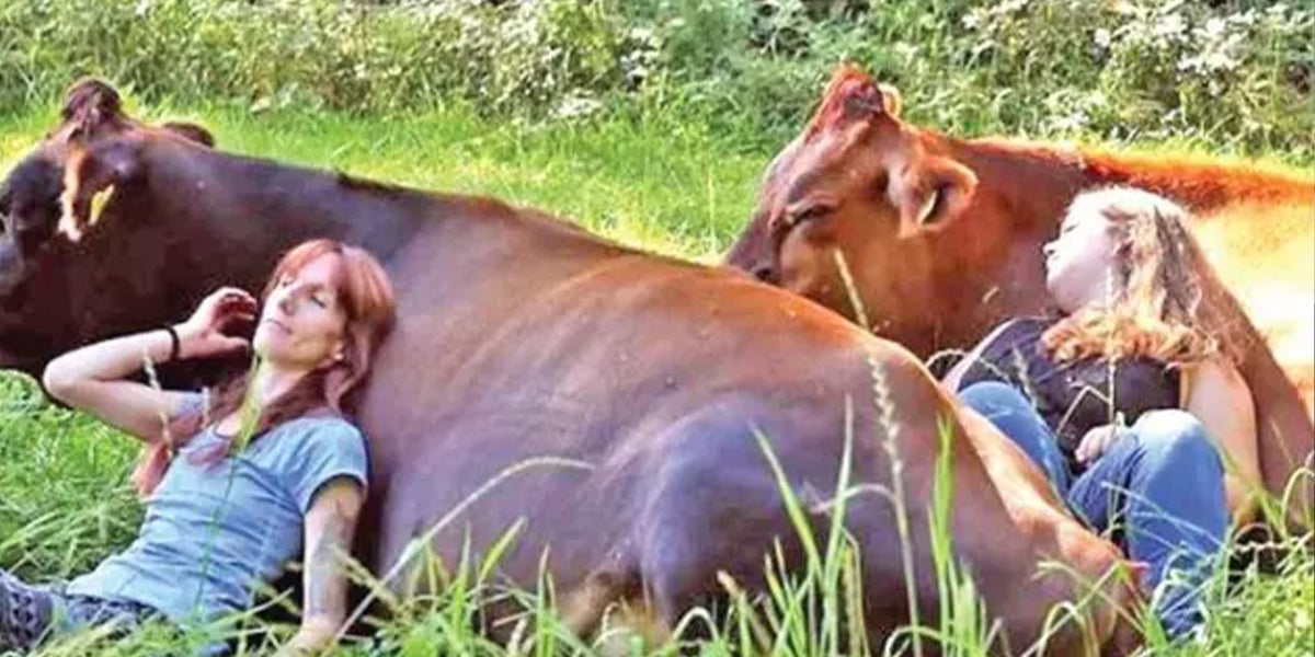 For $75 You And A Friend Can Cuddle A Cow For An Hour