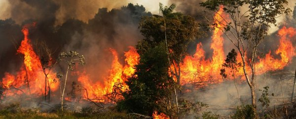 Amazon burning: The sky never goes dark while the rainforest blazes