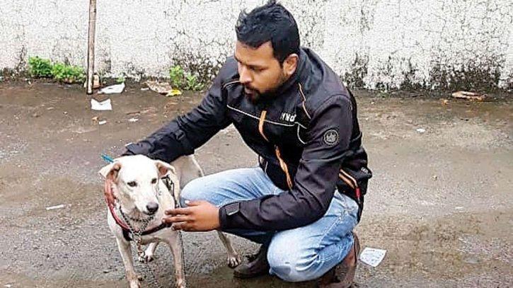 Mumbai Man Rapes Stray Dog, Arrested After Animal Rights Activist & PETA India File FIR
