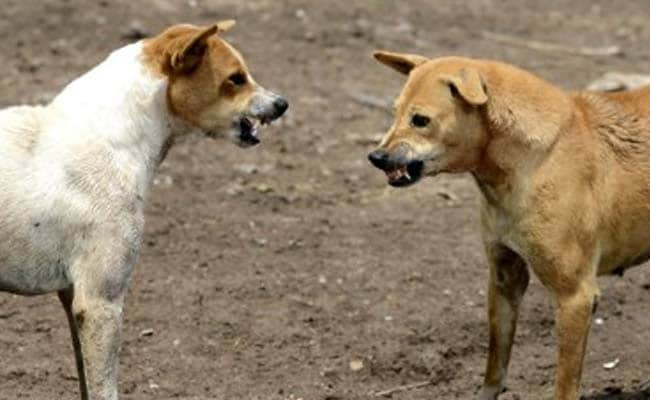 90 Dogs Found Dead With Muzzles, Legs Tied In Maharashtra