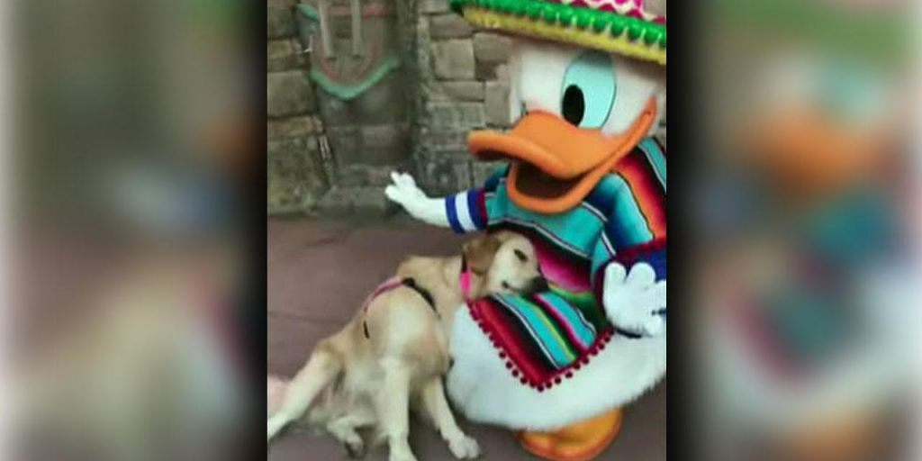 This video of a service dog meeting Donald Duck is the cutest thing you'll see today