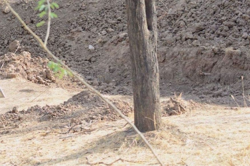 Can you Spot the Leopard Hidden in this Viral Photo Which Has Netizens Scratching Their Heads?