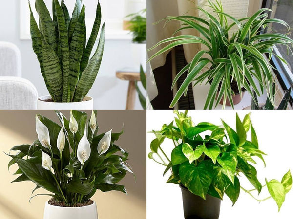 5 air-purifying indoor plants that are great alternatives to modern-day air purifiers