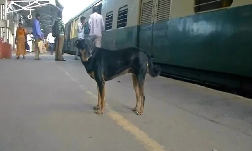 Abandoned Dog Barks At Those Flouting Rules At Chennai