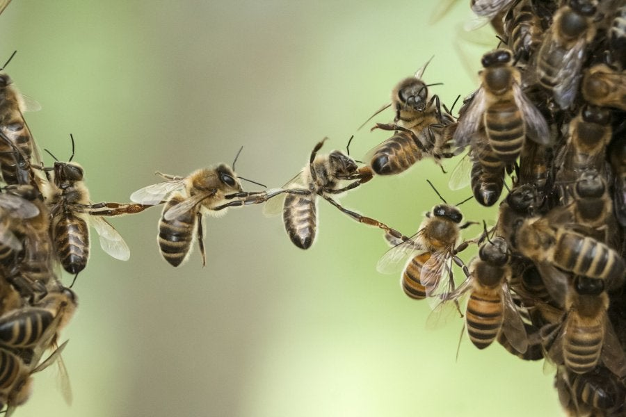 A Mushroom Is Saving Millions Of Bees From A Deadly Virus