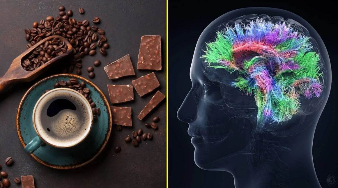 Can Coffee and Chocolate Increase Intelligence? What Research Reveals