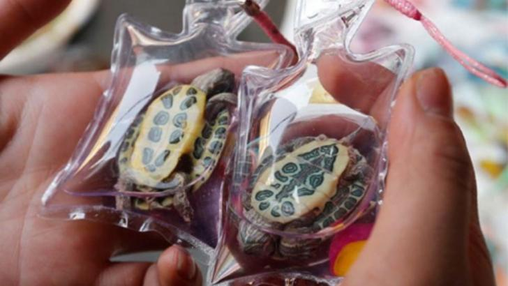 Live Animal Key Chains Are Still Sold In China Amidst Claims Of Animal Cruelty