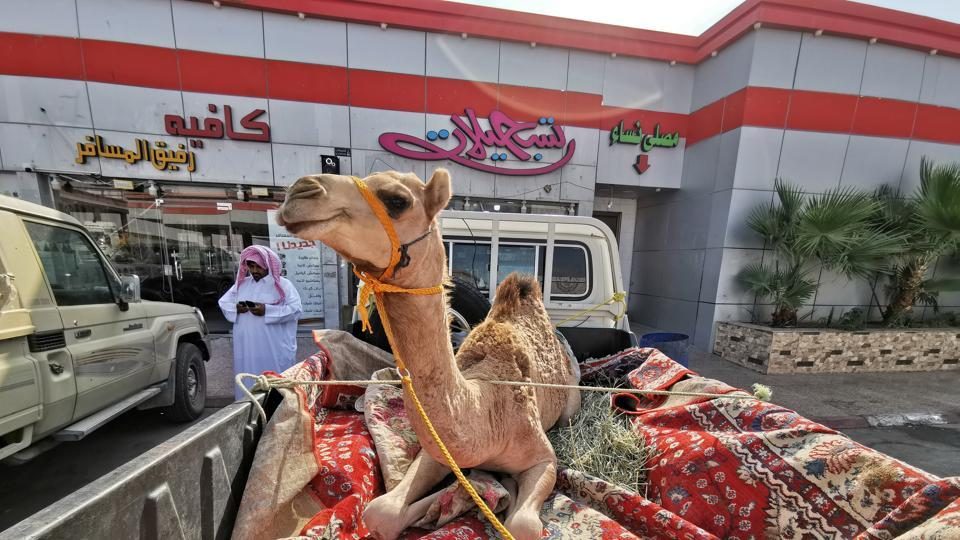 Woman sues TripAdvisor after falling off runaway camel