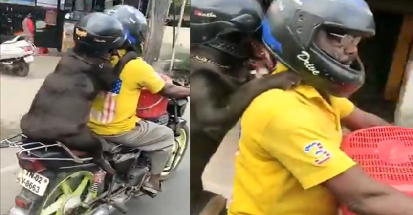 In Chennai, Dog Wearing Helmet During Bike Ride Wins Hearts