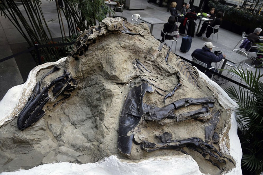 120 Million-Year-Old Fossil of Dinosaur With Feathers Discovered in China