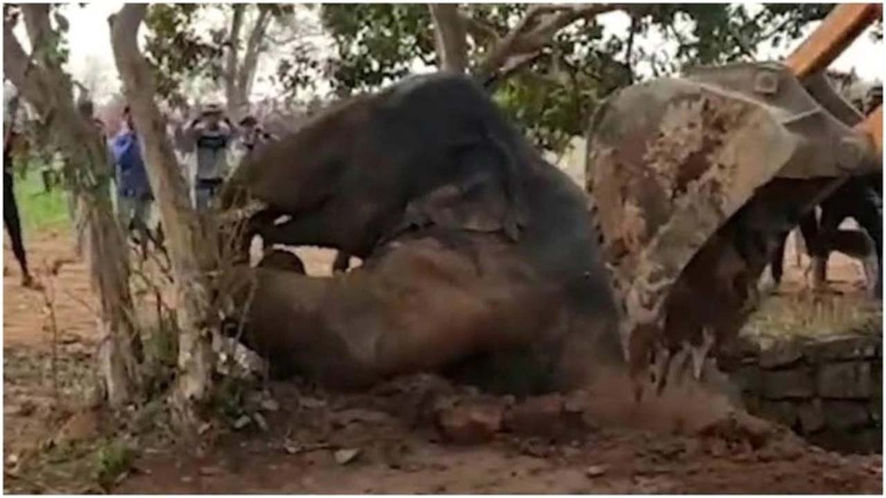 Viral video: Jharkhand's forest dept uses Archimedes principle to rescue elephant stuck in well