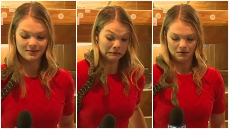 In Terrifying Video, Reporter Screams As Snake Repeatedly Strikes Mic