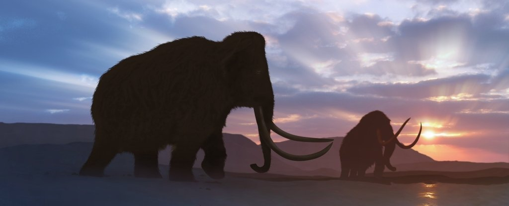 Ancient Genes Reveal The Last Mammoths on Earth Were a Sickly Mess