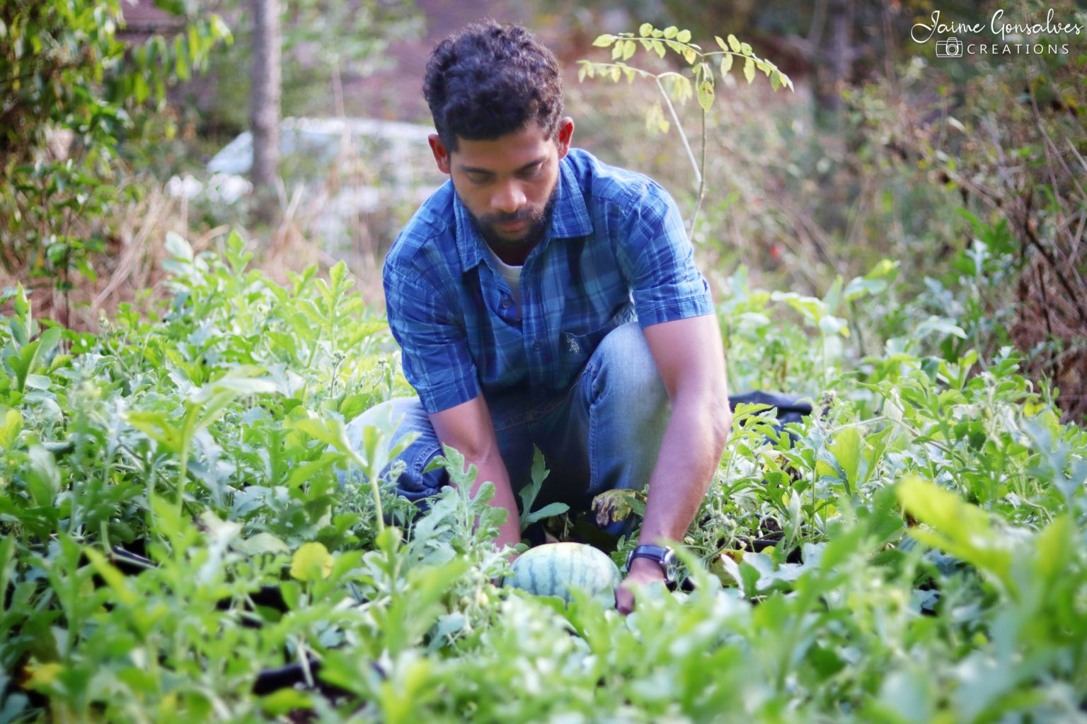 Engineer-Turned-Farmer's Way of Growing Yellow Watermelons Takes Goa By Storm