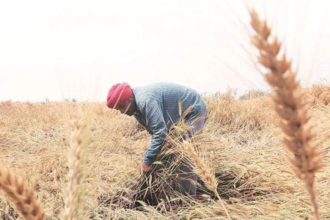 Privatisation enters agri market: For the first time, farmers will have option other than govt