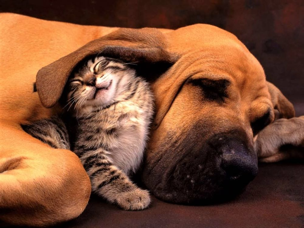 Did you know that having a Dog or a Cat has a deep spiritual meaning? Read here