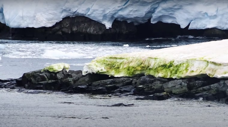 Climate change is turning Antarctica's snow green