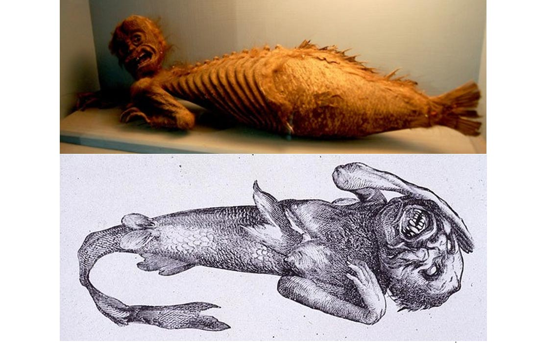 The Fiji Mermaid: What Was the Abominable Creature and Why Was It So Popular?