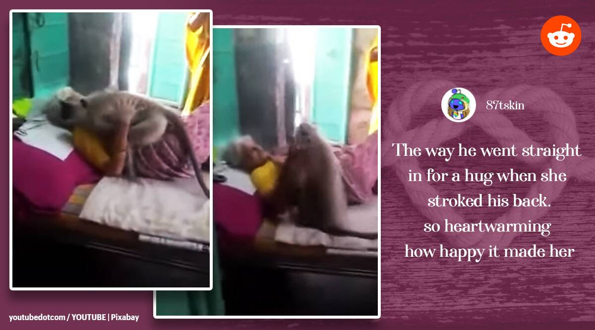 Viral video: Woman who fed langur falls sick, primate turns up at home and hugs her