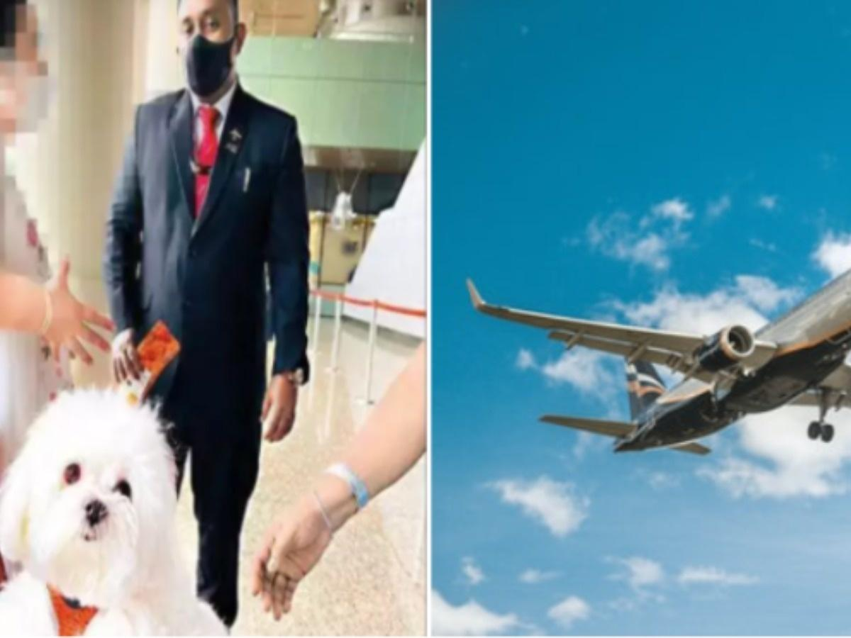 Lucky Dog! A Person Booked An Entire Business Class Cabin Of An Air India Flight For His Dog
