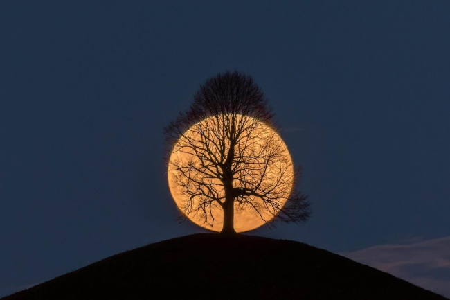A tree on a full moon
