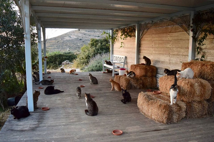 1. Taking care of cats on a gorgeous Greek island