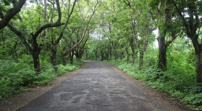 1. Aarey Milk Colony