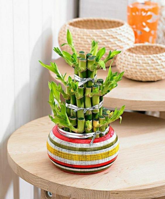 1. Bamboo