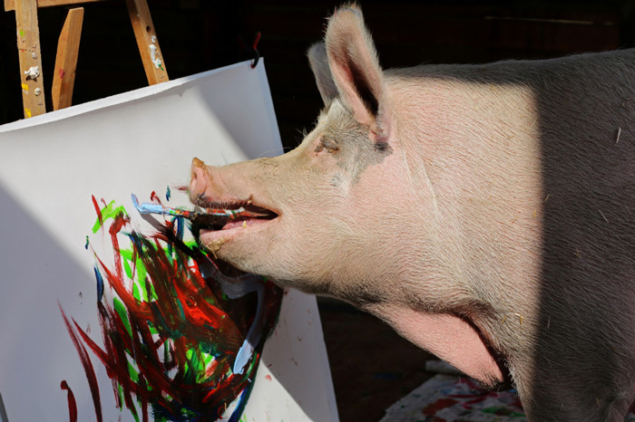 Meet Pigcasso, an artistic pig from Cape Town which is making headlines by becoming the first non-artist and African to design a Swatch watch.