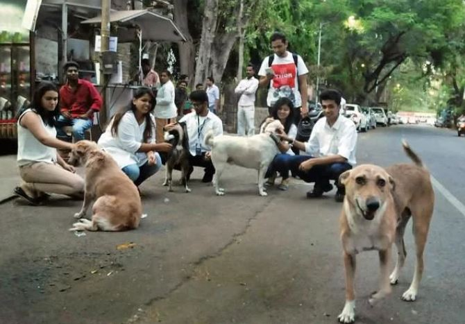 1. All animals in Haryana now have the same rights as people, and every citizen is their guardian.
