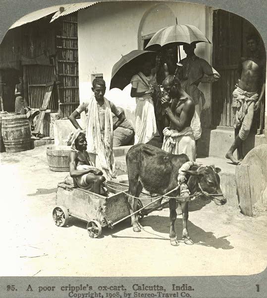 A man and his ox-cart — Kolkata