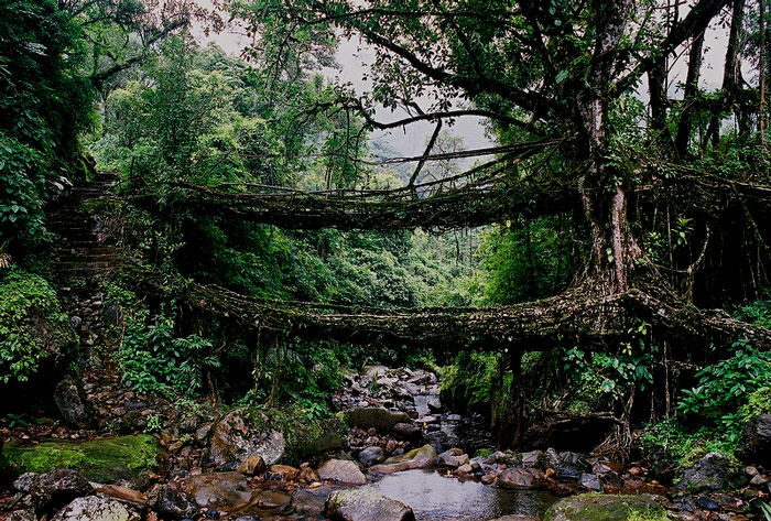 Living Root Bridge -Cherrapunjee The Living Root Bridges of Cherrapunji are the major tourist attraction and the spectacular natural thing in this world. The form of tree shaping and the suspension bridges is used by people living in many villages around Cherrapunjee, second wettest place on earth in Meghalaya.