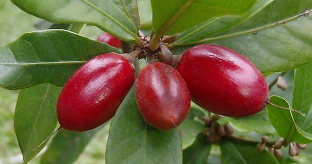 The Flavor-Bending Berry
