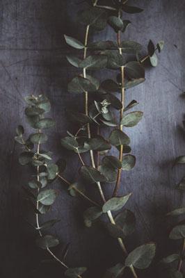 3. Eucalyptus Oil