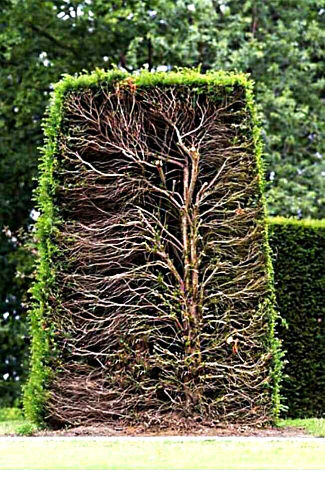 A sectional view of a hedge