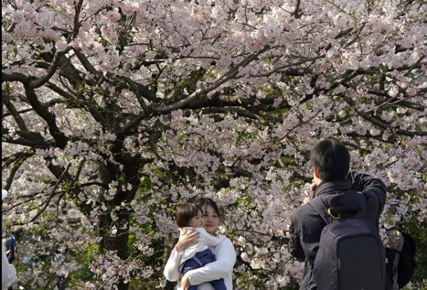 A family takes a picture of cherry blossom flowers at full bloom at Chidorigafuchi in Tokyo.