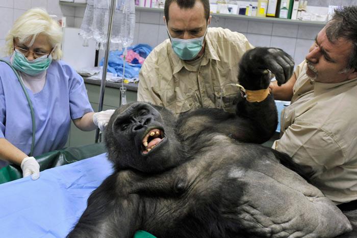 Veterinarians prepare the Budapest Zoo
