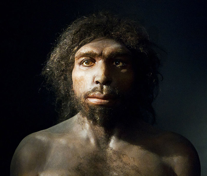 4. Homo antecessor One of our first European ancestors settled across the continent from Spain to Georgia 1.2 million to 700,000 years ago. Their large brains (over 1000 cc) helped them out tremendously during their reign in Europe.