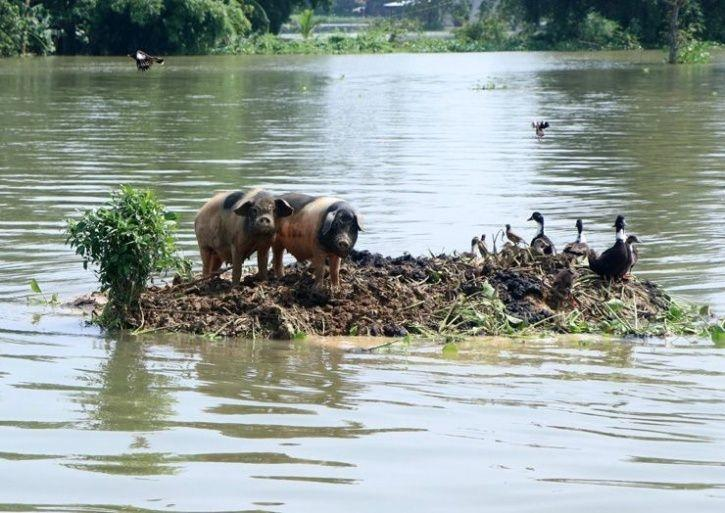4. With 90 percent of Kaziranga submerged, smaller animals are struggling to stay afloat.