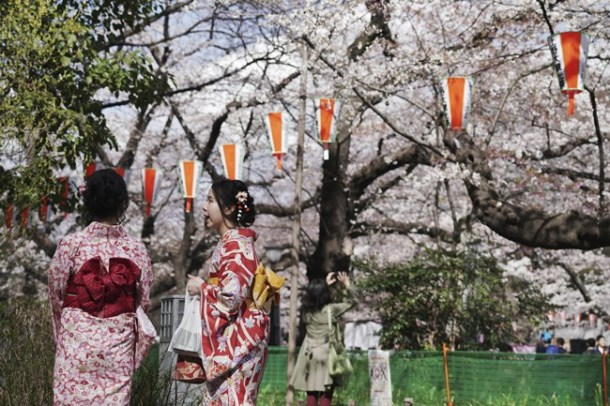 Kimono-clad visitors view the blooming cherry blossoms in Tokyo.