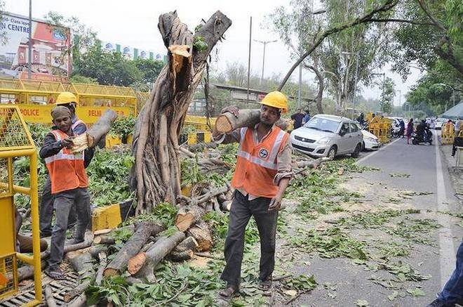 5. Trees are being cut in Delhi at an alarming rate.