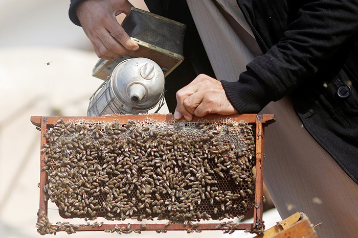 Haj Omar Abulhassan uses smoke to calm the bees used in the process of treatment for a variety of ailments on the roof of his home in Cairo, Egypt.