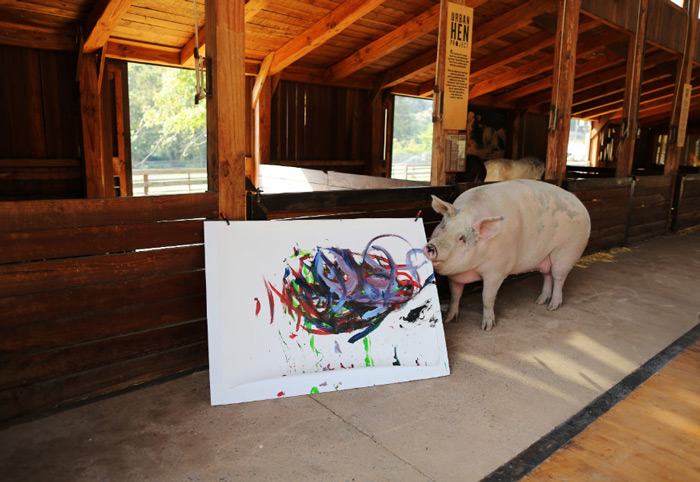 Pigcasso holds a canvas at the Farm Sanctuary in Franschhoek, outside Cape Town, South Africa.