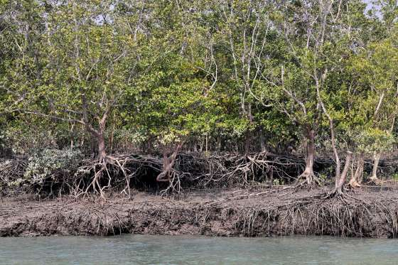 SUNDERBANS: LARGEST MANGROVE IN THE WORLD
