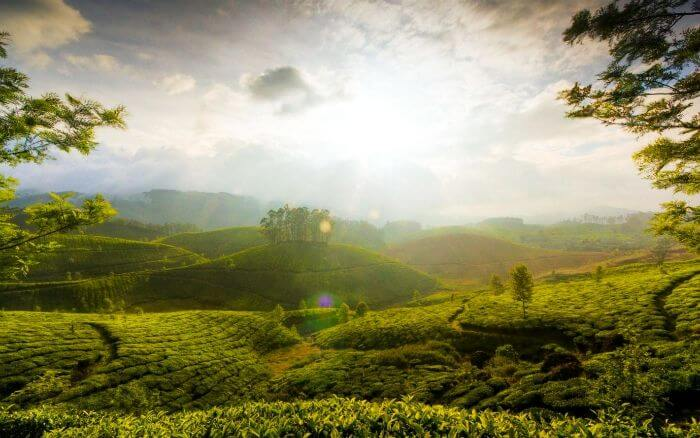 Munnar, Kerala – The hill town of God's own country